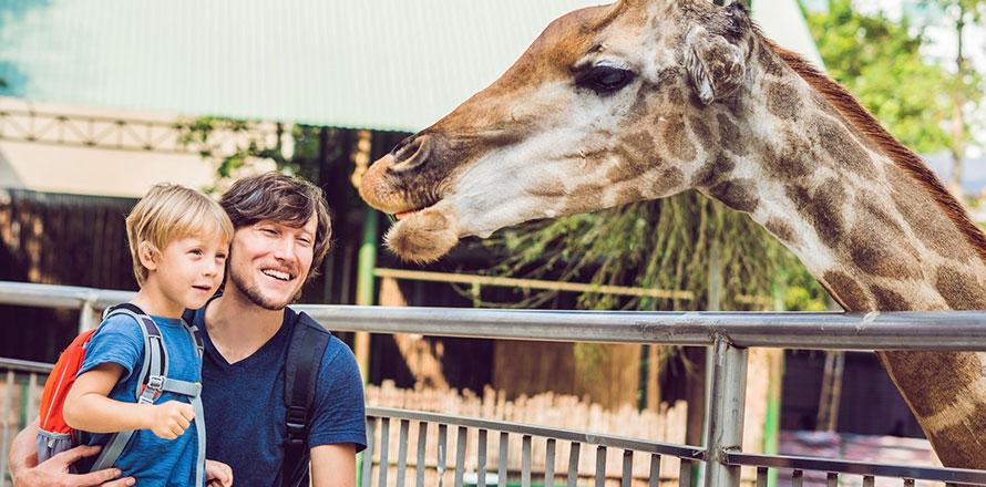 Vater füttert mit seinem Sohn eine Giraffe